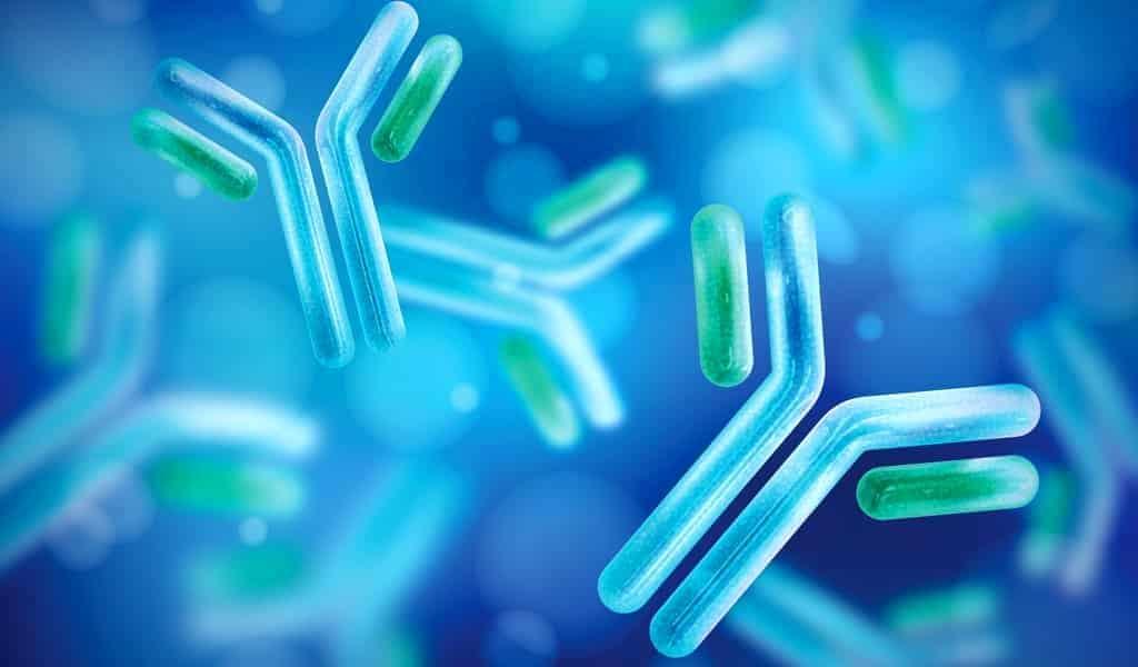 covid-19-des-scientifiques-cartograpies-un-puissant-anticorps