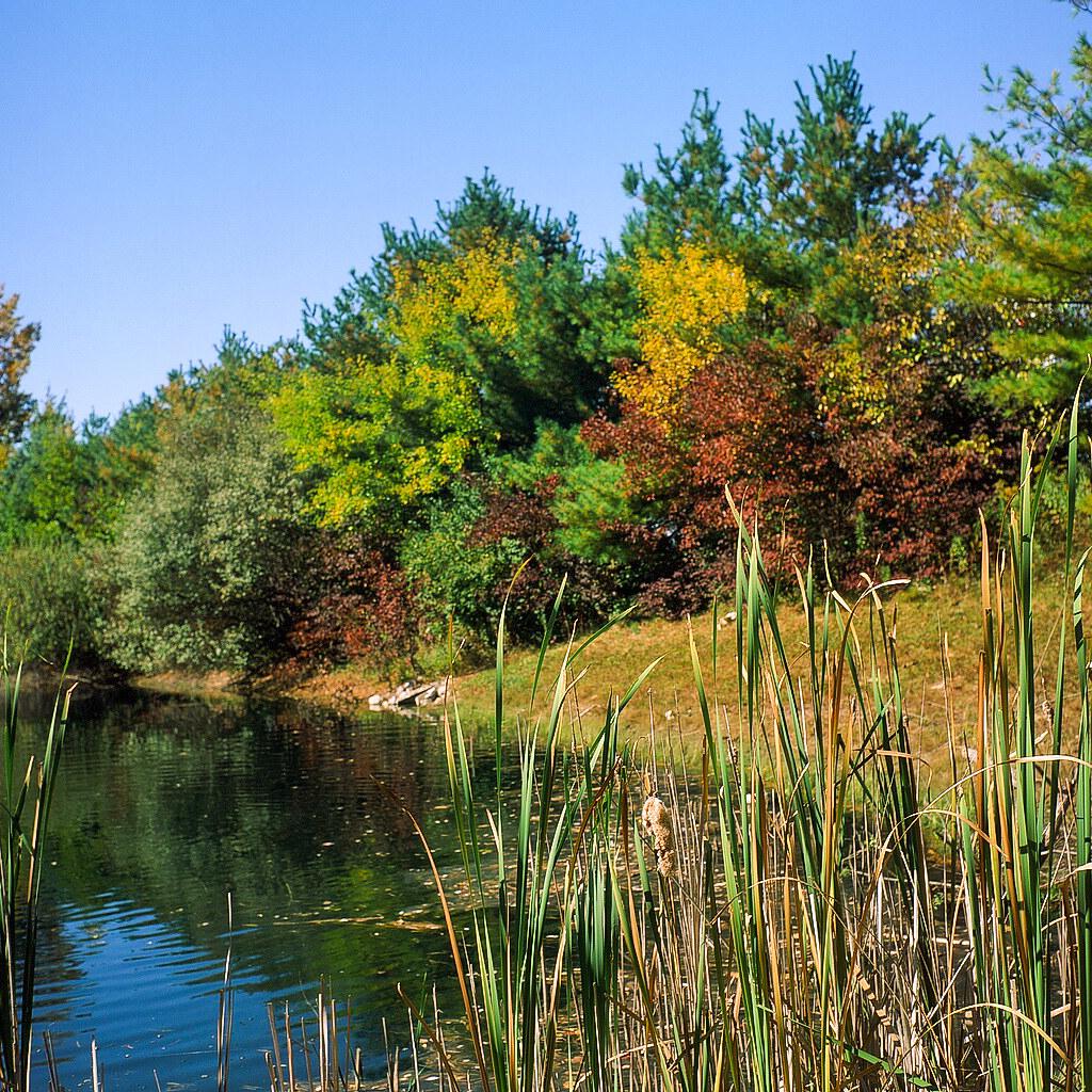 On the retention pond