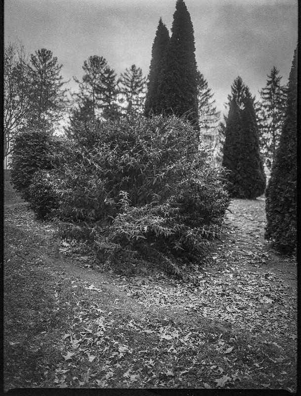 variety of conifers, grounds, Kenilworth Inn, Asheville, NC, Mamiya 645 Pro, mamiya sekkor 45mm f-2.8, Foma 400, HC-110 developer, 11.10.20
