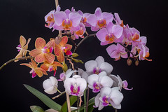Orchids - 3 different ones