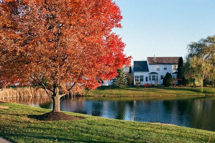 Orange tree at the pond