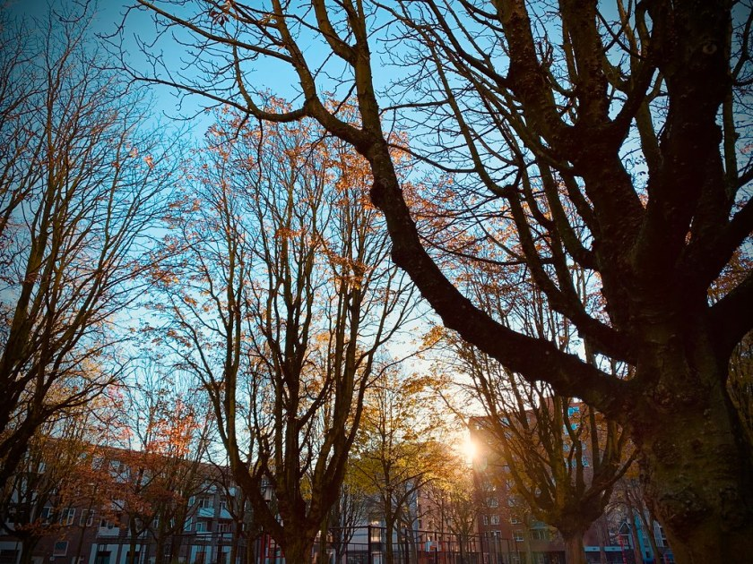 Rotterdam Daily Photo: Cold light of winter