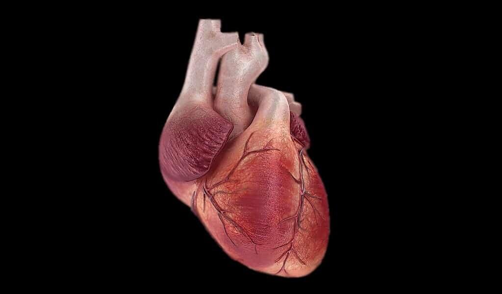 un-coeur-sain-aide-à-retarder-ou-prévenir-la-démence