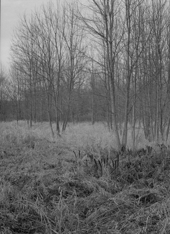 Grays Landing, Meadow Groves 2