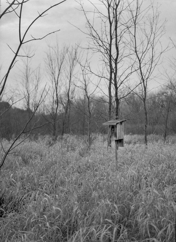 Grays Landing, Meadow Bird House