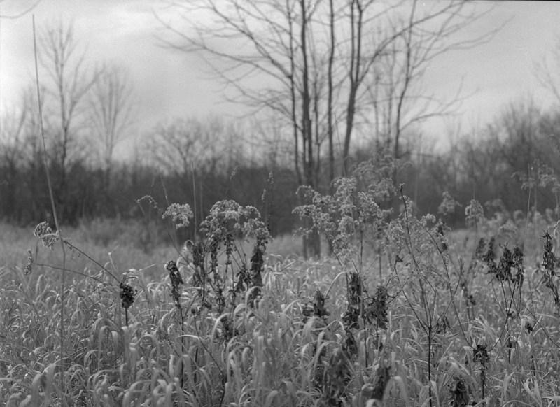 Grays Landing, Meadow