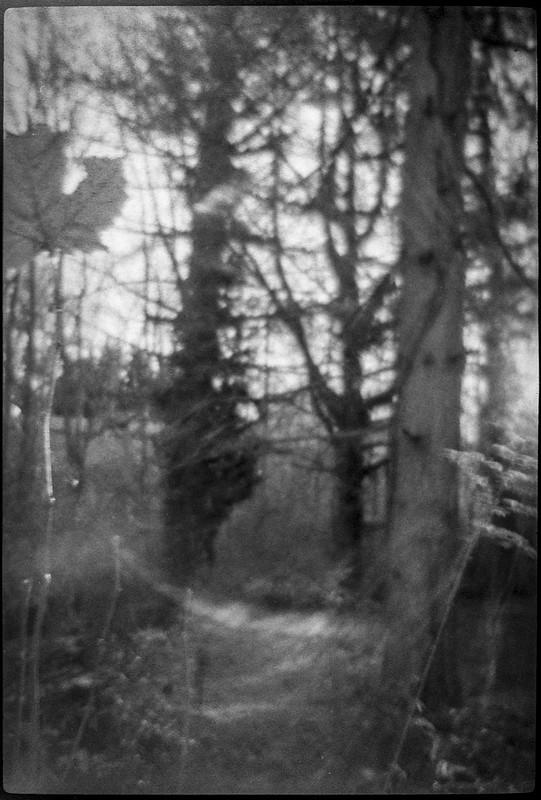 forest forms, forest's edge, large leaf, backlit, near dusk, Asheville, NC, Bencini Koroll 24S, Foma 400, HC-110 developer, 11.23.20