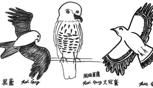 鷹:黑鳶、大冠鷲、鳳頭蒼鷹