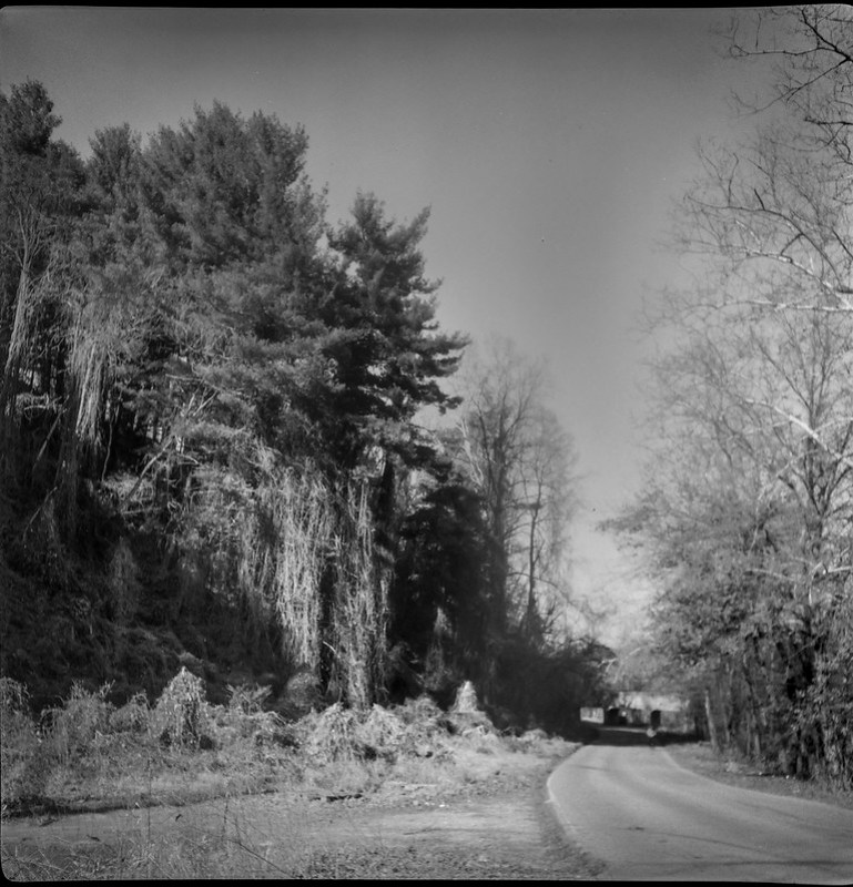 winter landscape, dormant kudzu,late light, Emma Road, Asheville, NC, Flektar twin lens reflex, Fomapan 200, Moersch Eco film developer, 12.13.20