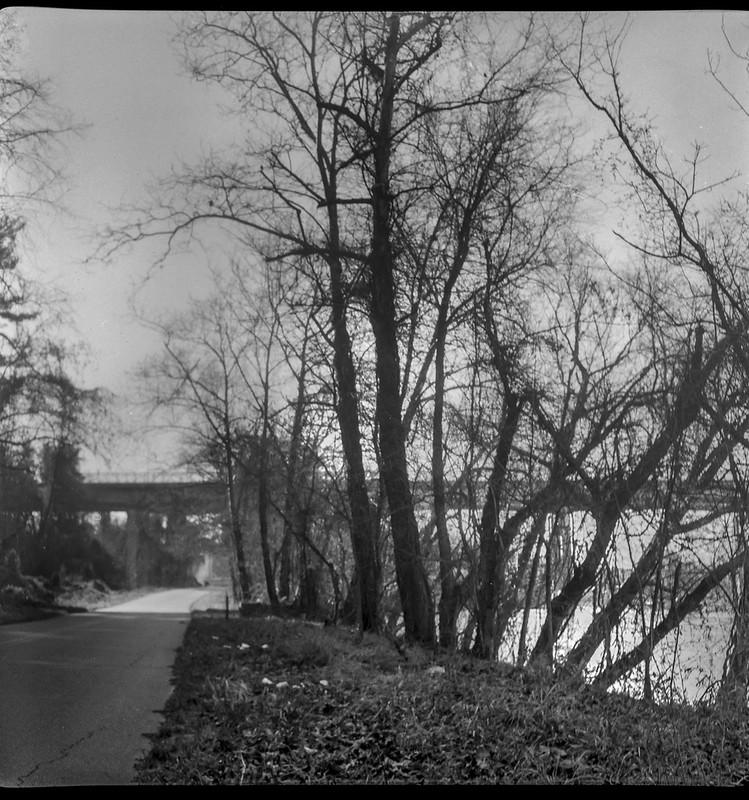 rhythmic movement, trees, backlit, riverside, distant bridge, French Broad River, railroad bridge, Emma Road, Asheville, NC, Flektar twin lens reflex, Fomapan 200, Moersch Eco film developer, 12.13.20