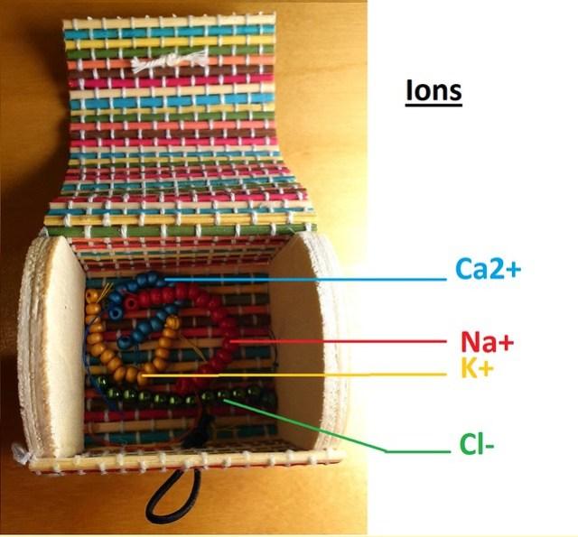 Boîte à ions - Neurones commandés par l'Université Paris Descartes.