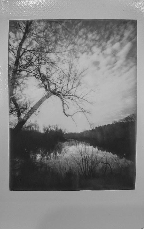 winter landscape, bare trees, backlit, lagoon, patterned coulds, near dusk, Biltmore Estate, Asheville, NC, Lomo'Instant, Instax Mini Monochrome film, 12.29.20