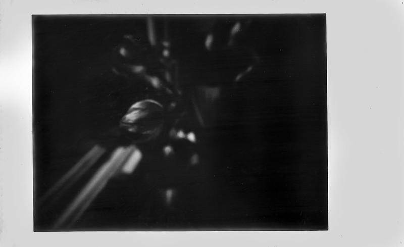 tulips, blossoms, window sill, dining room, Asheville, NC, Lomo'Instant, Fujifilm Instax Mini Monochrome, 1.3.21