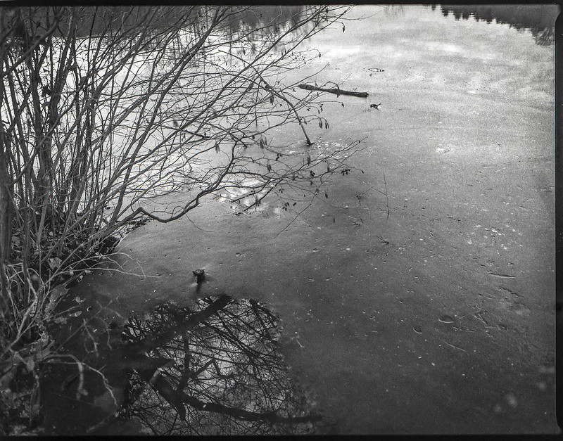 winter landscape, lagoon, surface, reflections, near dusk, Biltmore Estate, Asheville, NC, Mamiya 645 Pro, mamiya sekor 45mm f-2.5,  Fomapan 400, HC-110 developer, 12.29.20