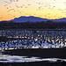 SUNSET MIGRATION AT BERNARDO