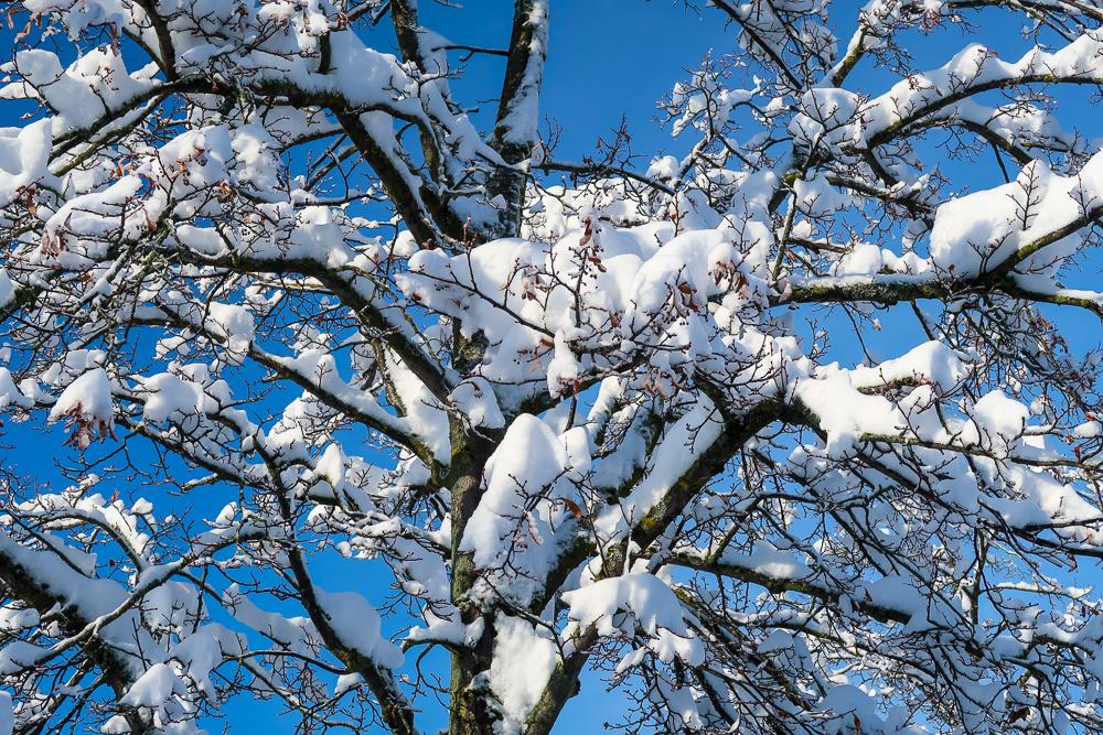 Schnee Spaziergang Friedrichshafen am Bodensee Januar 2021 hyyperlic-27
