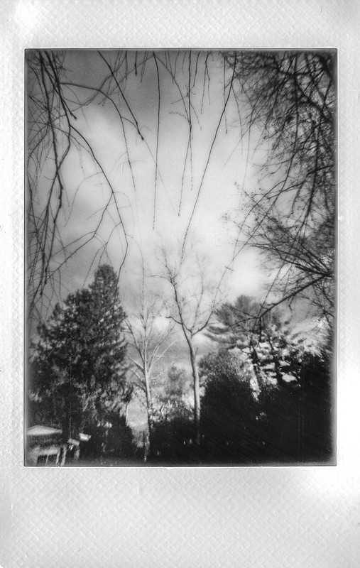 looking up, treetops, willow branches, near dusk, Asheville, NC, Lomo'Instant, Instax Mini Monochrome, 1.7.21