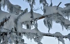 Nordic Winter -27