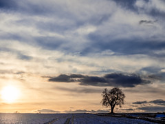 Cold Evening, warm Light...