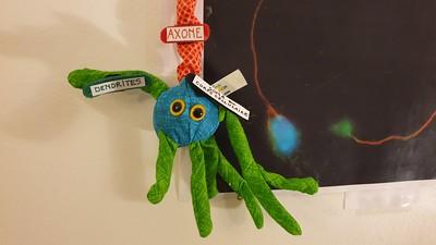 Neurone tricolore moteur
