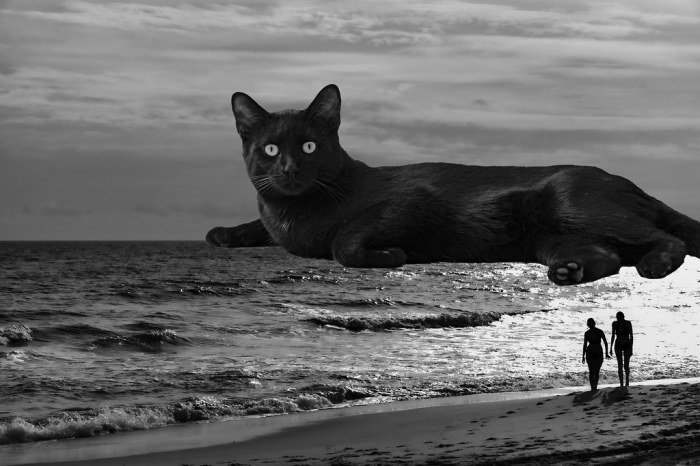 La Chat sur la Mer