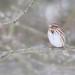 Sparrow Dumpling