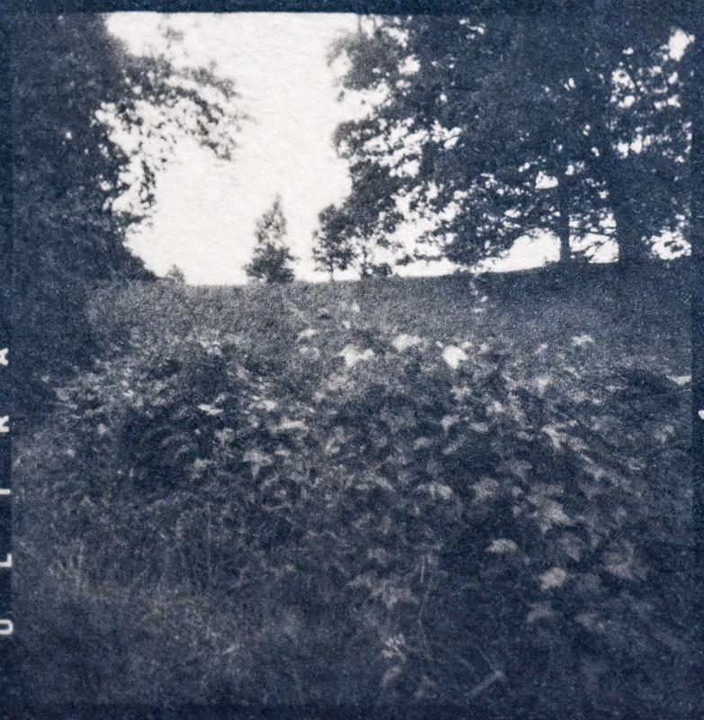 landscape, Biltmore Estate, Asheville, NC, cyanotype (coffee-toned), medium format negative, 6x6, shot with Ricohflex Dia M twin lens reflex