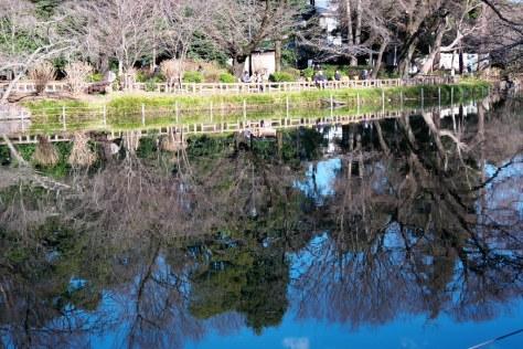 井の頭公園 Inokashira Park