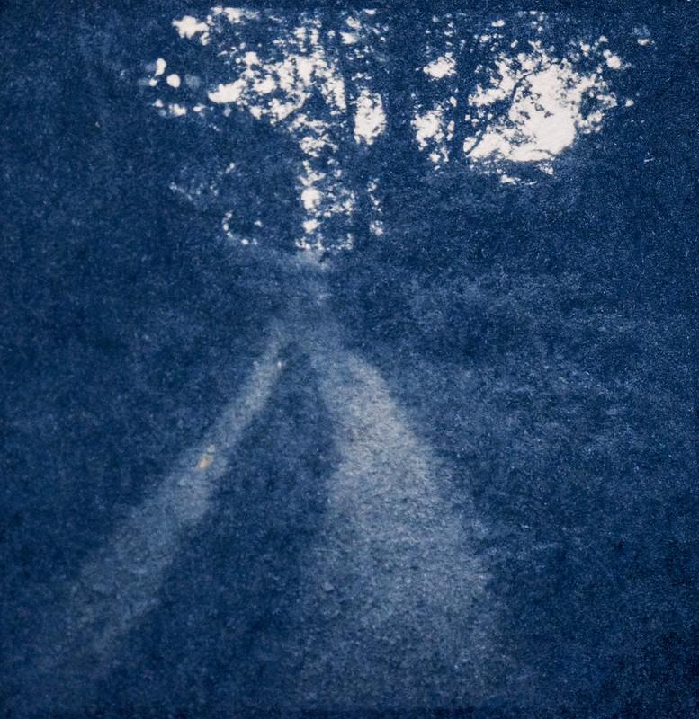 rural lane, unpaved, backlit trees, Biltmore Estate, Asheville, NC, cyanotype, 6x6 medium format negative, Eho Altissa box camera, Foma 200, Moersch Eco film developer, 6.21.20