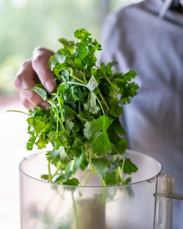 bunches of fresh cilantro and mint