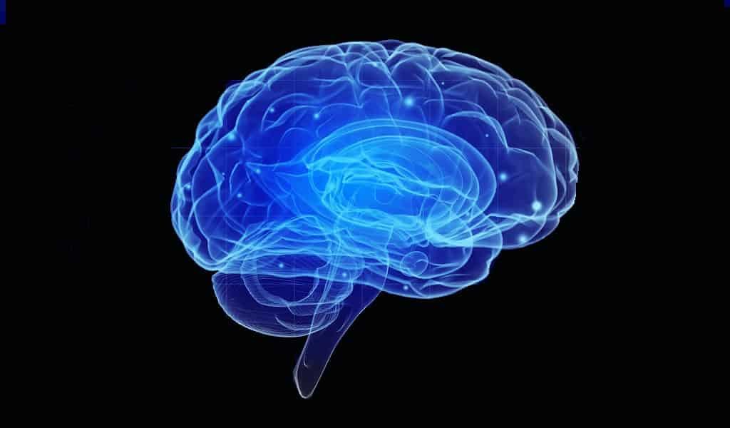 faire-croître-des-neurones-contre-les-maladies-neurodégénératives