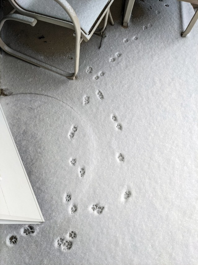 The pawprints go out and then they come right back in.