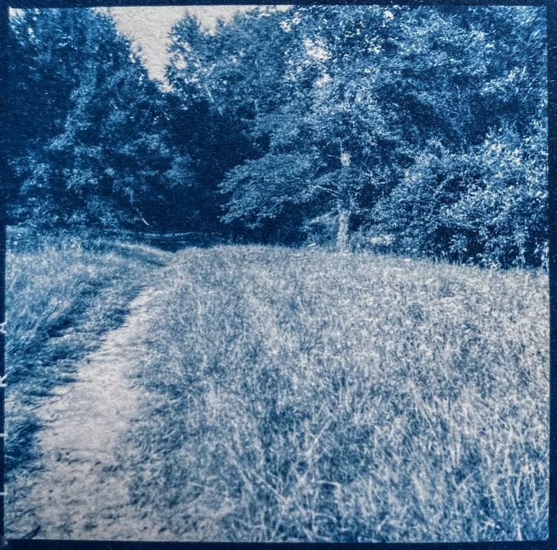 dirt pathway, forest's edge, Biltmore Estate, Asheville, NC, cyanotype, medium format film negative, Ricohflex Dia M, Fomapan 200, Moersch Eco developer, 8.17.20