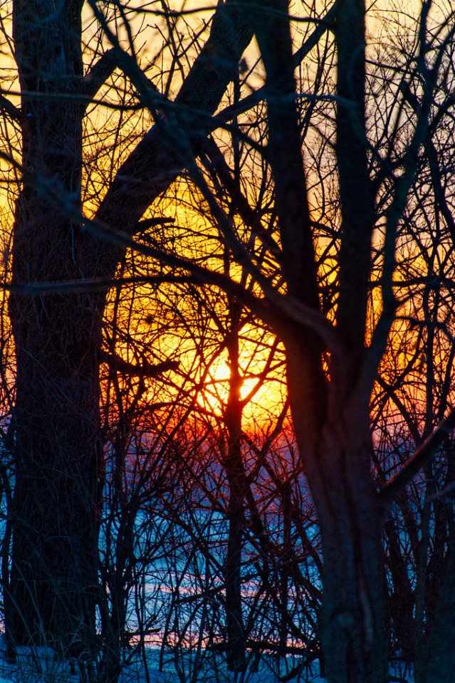 Very bright and colorful, through the trees.