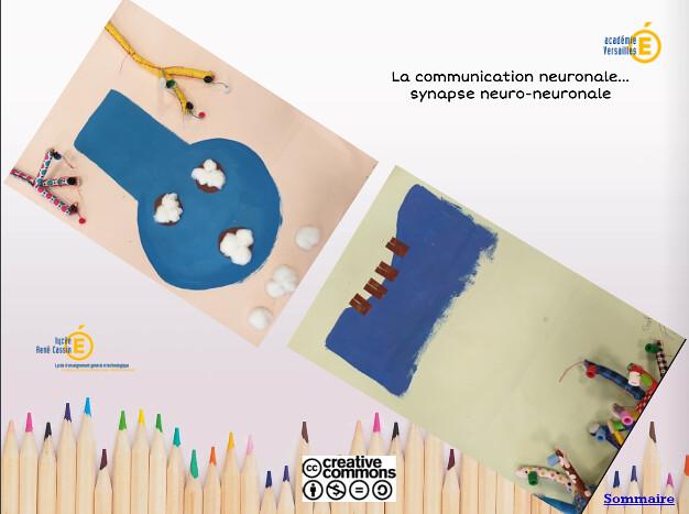 """""""Blue synapse"""" par Fanny, Lycée Renée Cassin, Gonesse. A gauche: Neurotransmetteurs (coton) dans leur vésicule (marron) dans les terminaisons axonales (bleu). A droite : Récepteurs (marron) sur les dendrites (bleu)."""