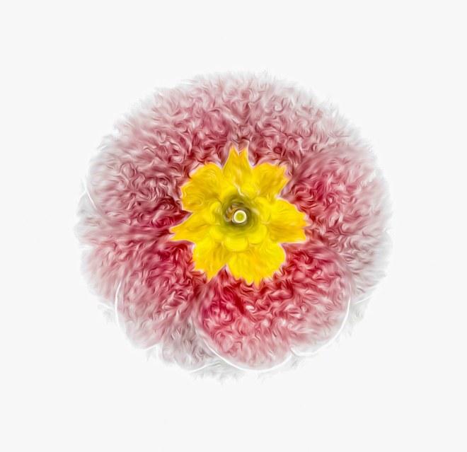 Day 063-21 spring flower