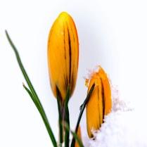 Schnee zum Frühlingsanfang