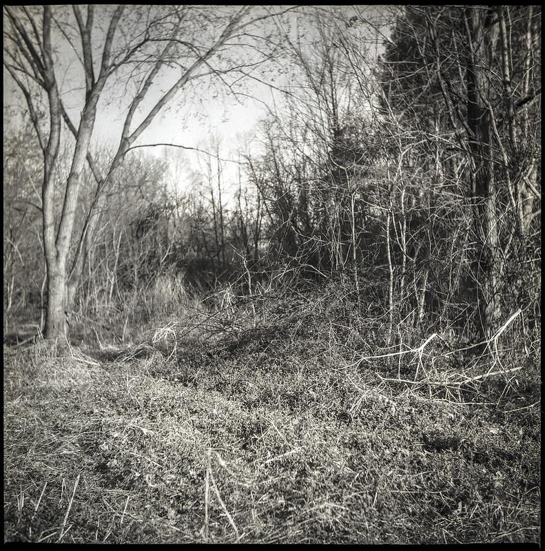 knarly and dried vegetation, trees, abandoned land below Sam's Club, Asheville, NC, Yashica D, Foma 200, Ilfosol 3 developer, 3.21.21