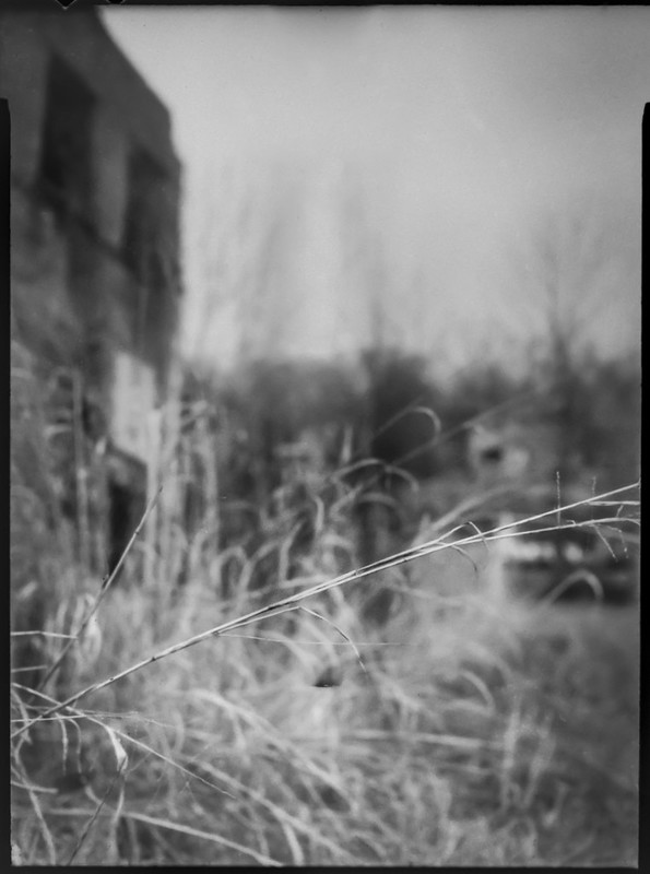 dried grasses, reeds, abandoned mill, urban decay, River District, Asheville, NC, Folmer Graflex R.B. Series B, Kodak Anastigmat f-4.5, Adox CHS 100 II, Ilfosol 3 developer, 4.3.21