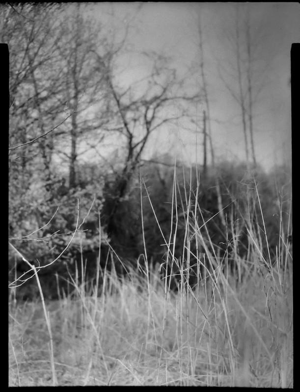 dried grasses, reeds, late winter, River District, Asheville, NC, Folmer Graflex R.B. Series B, Kodak Anastigmat f-4.5, Adox CHS 100 II, Ilfosol 3 developer, 4.3.21
