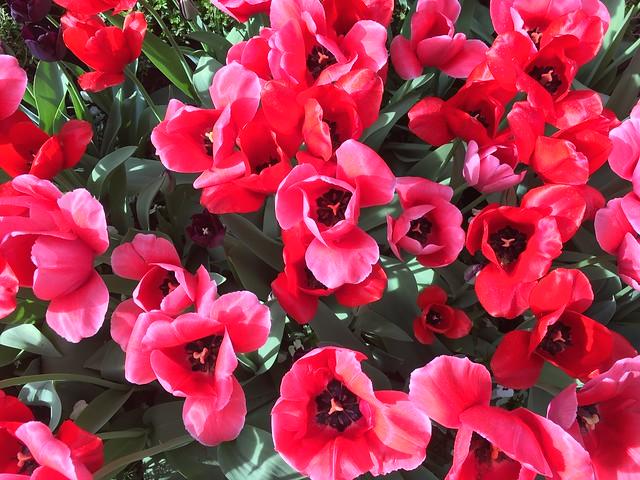 April 2021 flowers 1