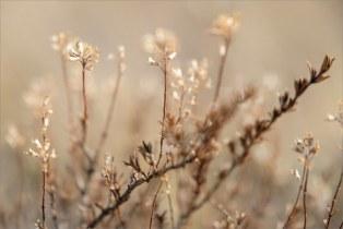 Берег Банного, прошлогодняя трава. Странно, птицы поют, бабочки летают, а цветов еще нет..  + Marumi DHG Achromat Macro 330 (+3)