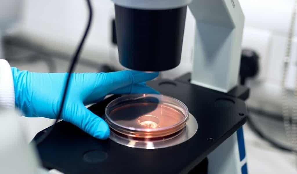 une-levure-probiotique-produit-du-bêta-carotène