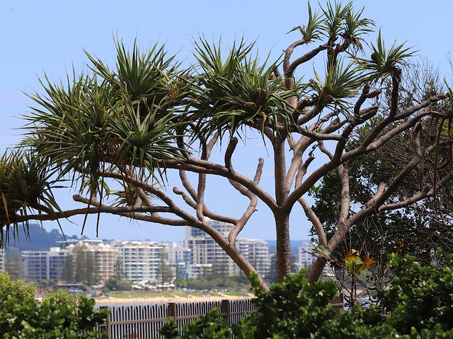BUDDINA, POINT CARTWRIGHT, SUNSHINE COAST, QUEENSLAND, AUSTRALIA :copyright: