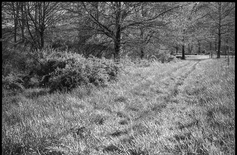 grassy roadway, sunlit spring landscape, Biltmore Estate, Asheville, NC, Konica Autoreflex T, Hexanon 57mm 1.4, Foma 200, Ilfosol 3 developer, 4.17.21
