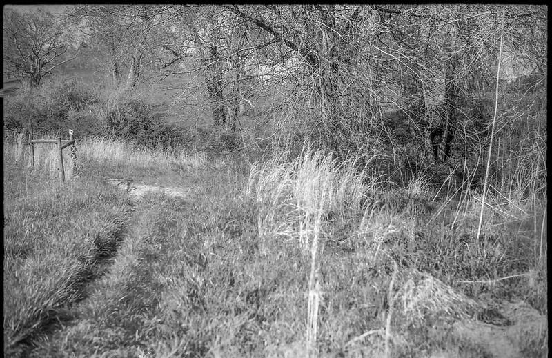 grass roadway, fence posts, tall grasses, thicket, Biltmore Estate, Asheville, NC, Konica Autoreflex T, Hexanon 57mm 1.4, Foma 200, Ilfosol 3 developer, 4.17.21