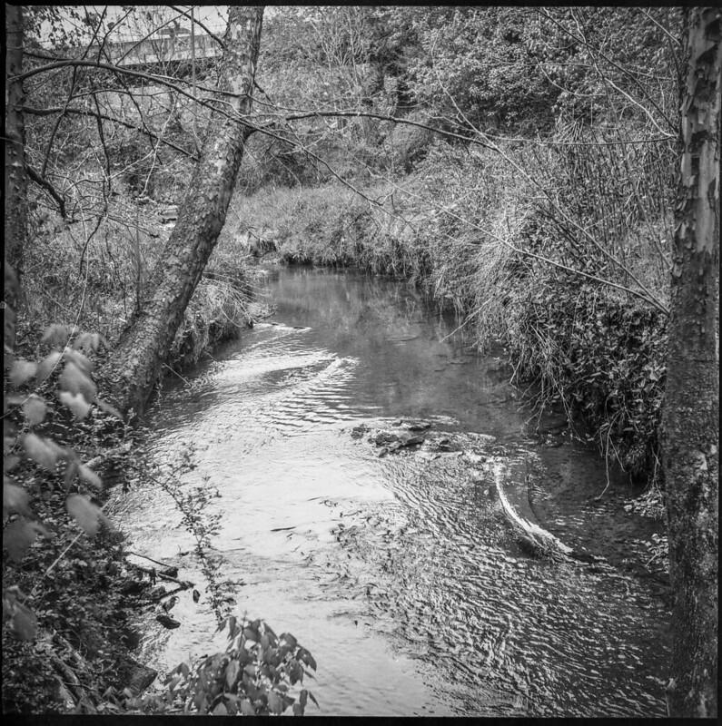small stream, spring landscape, abandoned land behind Sam's, Asheville, NC, Ricohflex Dia M, Fomapan 200, Ilfosol 3 developer, 4.24.21