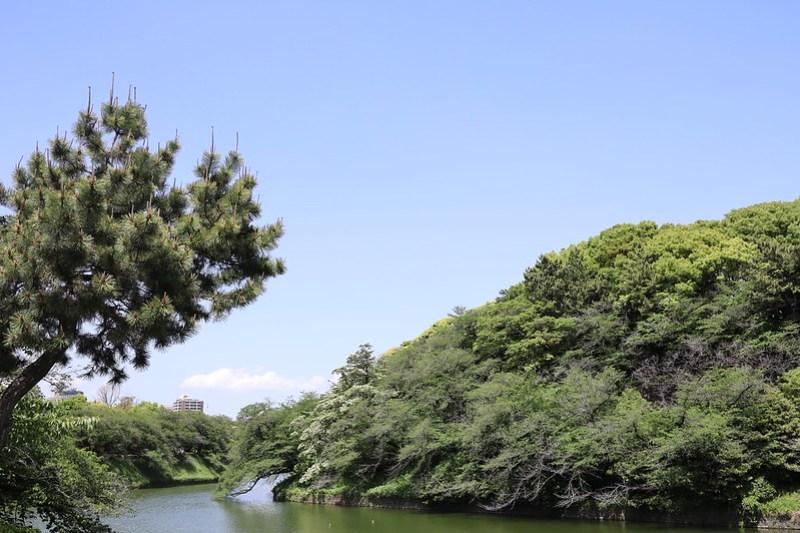 after Sakura season at Chidorigafuchi 01