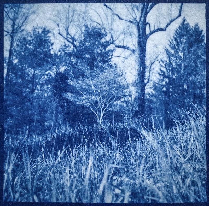 trees, grasses, hillside, BIltmore Estate, Asheville, NC, cyanotype, natural fiber hot press paper, 6x6 medium format film negative, Yashica D twin lens reflex, late April 2021
