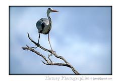 Parc Ornithologique du Pont de Gau 202105 02